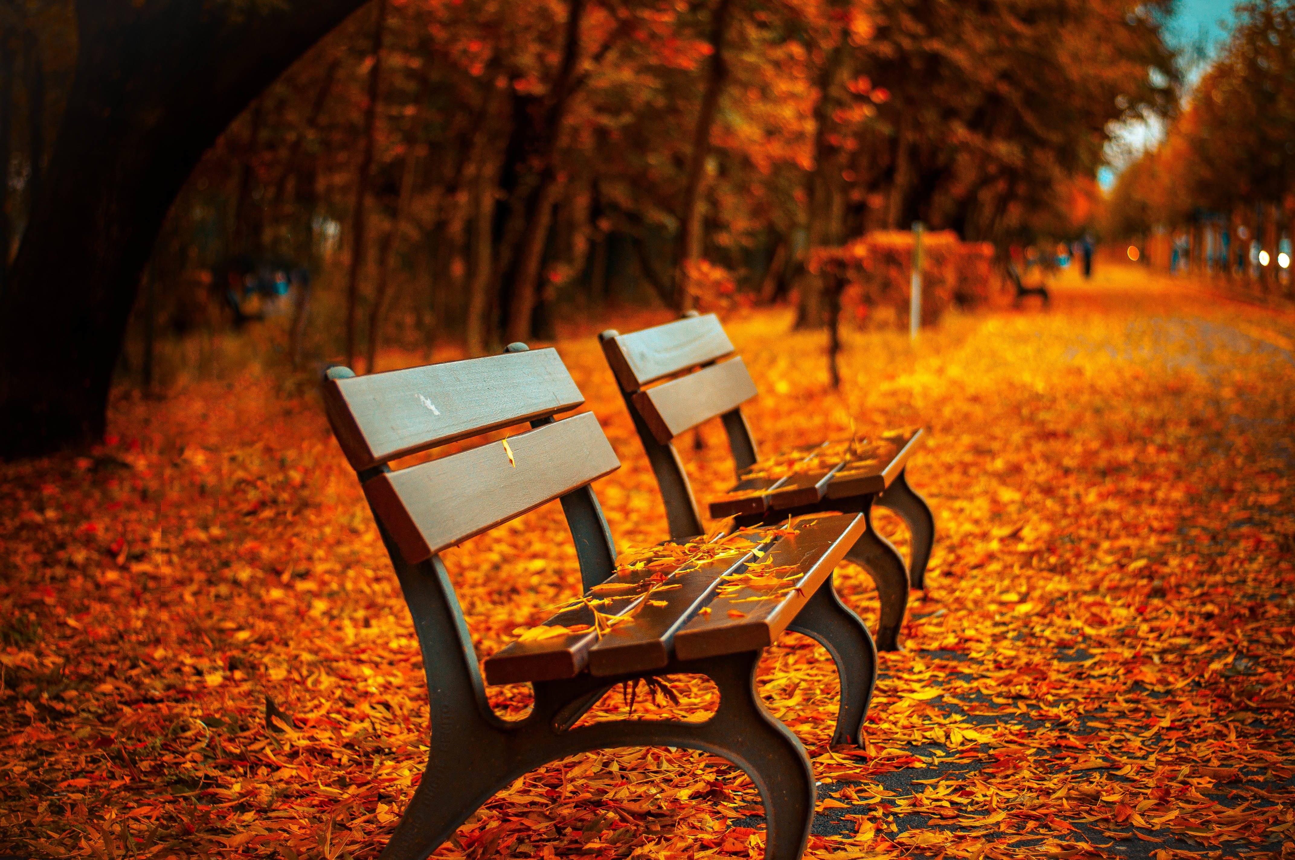 bench-forest-trees-path.jpeg