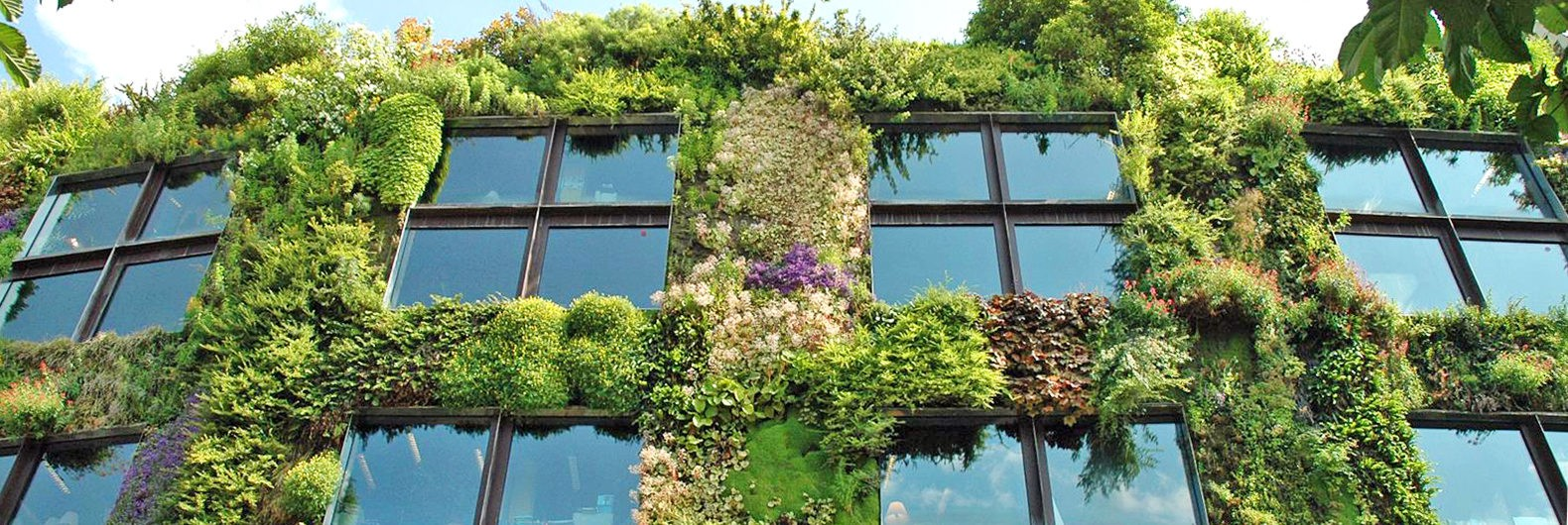 urban garden.jpg